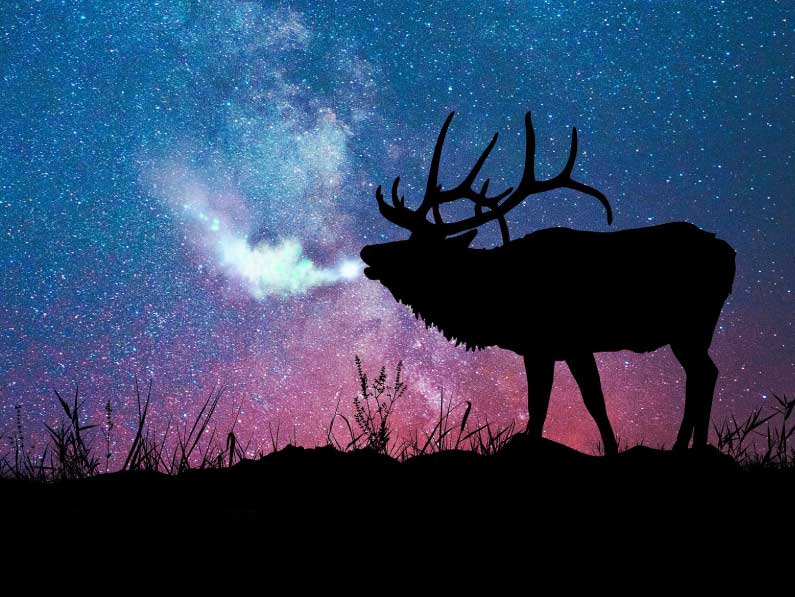 Silhouette of bull elk with night sky in background.